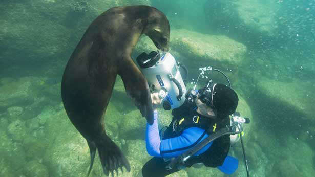 A Sea lion, Los Islotes