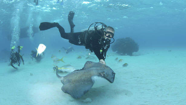 Stringray City, Grand Cayman